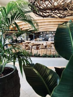 Freshwater | Harbord Diggers Club