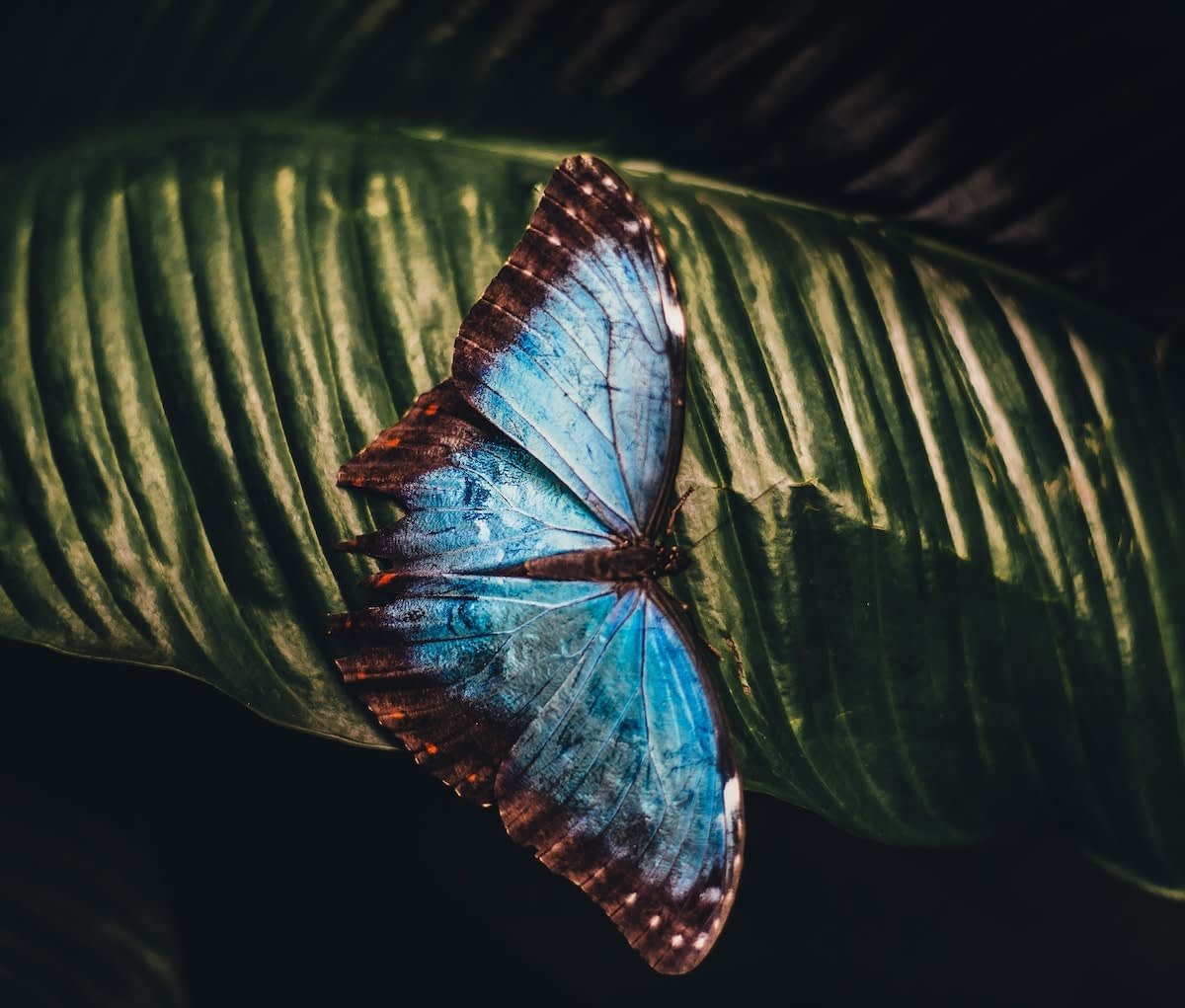 The Other Butterfly Effect